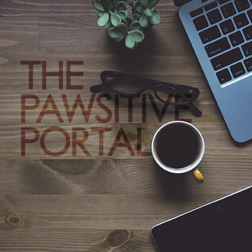 Pawsitive Portal for Jacksonville dog training clients